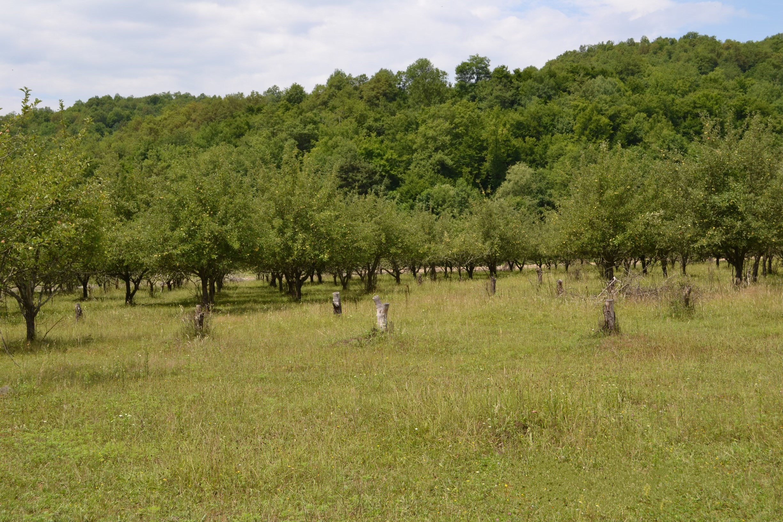 Земельный участок с.Анастасиевка